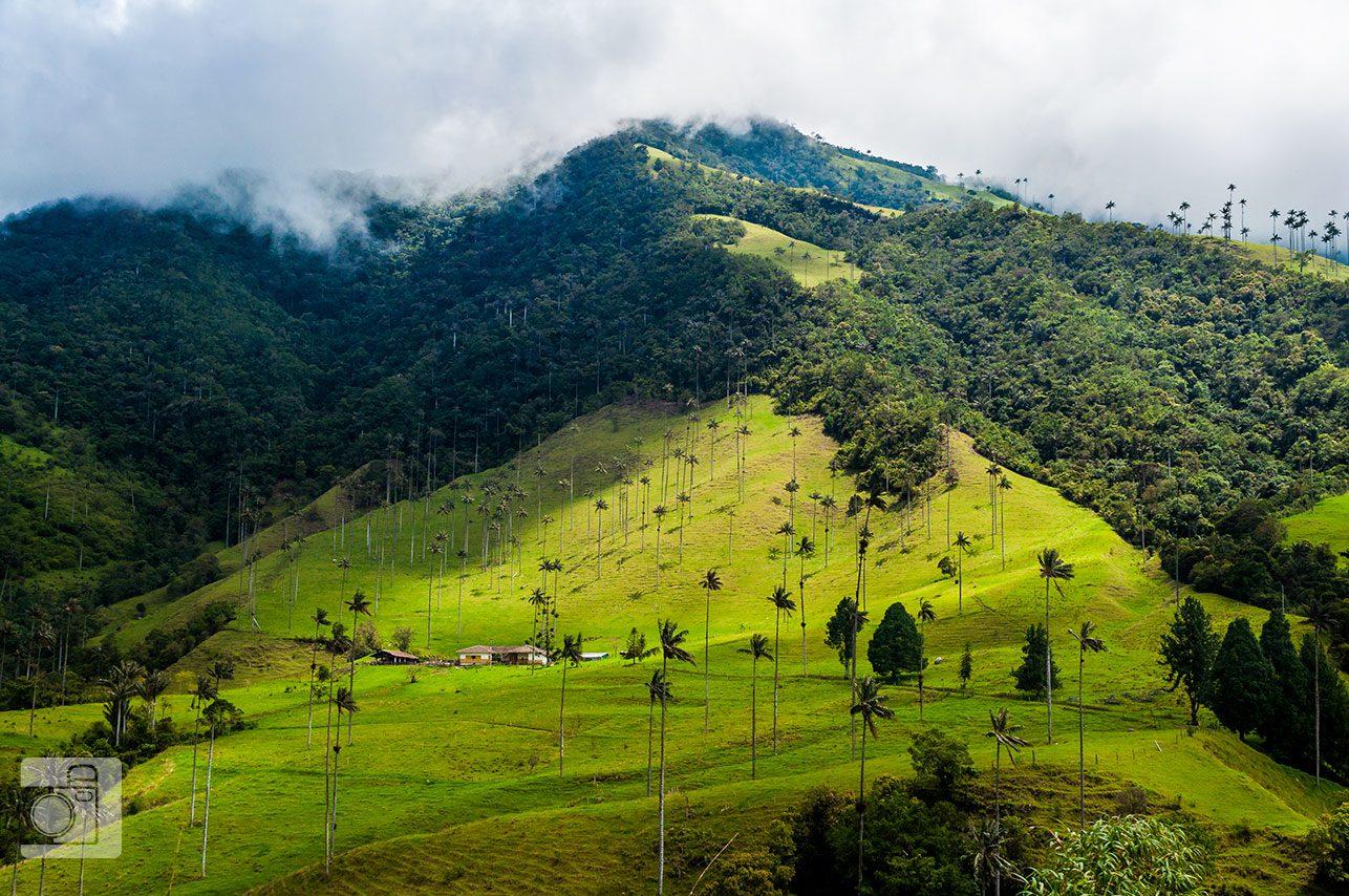 Recorrido por el Eje Cafetero: Salento y Valle de Cocora